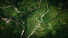 Luchtbeeld van rijstaanplanting in Bali royalty-vrije stock fotografie