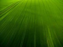 Luchtbeeld van weelderige ingediend groen Stock Fotografie