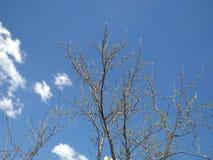 Luchtbomen Blauwe hemel Witte wolk stock foto