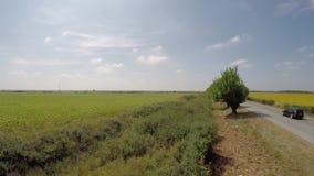 Luchtdie4K Zonnebloemgebied van lucht in de heldere, zonnige ochtend, met blauwe hemel met verspreide wolken wordt bekeken - lage stock videobeelden