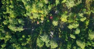 Luchtdiehommel over het het noorden Europese bos wordt geschoten stock videobeelden