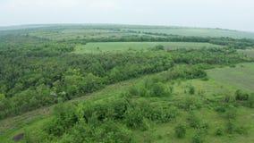 Luchtdiehommel van dicht bos en andere wildernis wordt geschoten stock footage