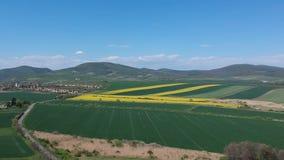 Luchtdiehommel van prachtig gele koolzaadbloemen wordt geschoten op het gebied stock videobeelden