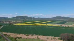 Luchtdiehommel van prachtig gele koolzaadbloemen wordt geschoten op het gebied stock video