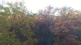 Luchtdiemening van de herfstbos met mist, stijgende beweging wordt behandeld stock videobeelden
