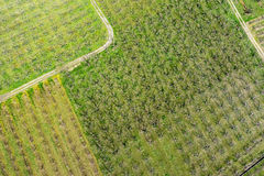 Luchtfoto's bloeiende perzikbomen in een boomgaard stock afbeeldingen