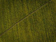 Luchtfoto's van geel oliezaad stock foto's