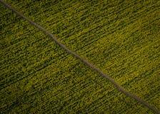 Luchtfoto's van geel oliezaad stock foto