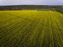 Luchtfoto's van geel oliezaad stock afbeelding