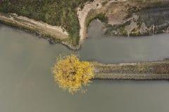 Luchtfoto van boom in de herfst royalty-vrije stock afbeeldingen