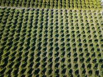 Luchtfoto van een oranje bosje in de lente royalty-vrije stock afbeelding