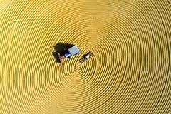 Luchtfoto van padieoogst in landelijk China Stock Fotografie