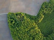 Luchtfoto van vliegende hommel van een land met jonge bomen en een geploegd gebied stock foto's