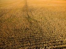 Luchthommelfoto - het graanlandbouwbedrijf van Illinois stock foto
