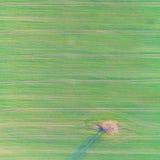 Luchthommelfoto van het groene gebied van het land met rijlijnen en boom Hoogste mening Royalty-vrije Stock Afbeelding