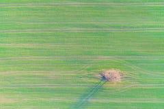 Luchthommelfoto van het groene gebied van het land met rijlijnen en boom hoogste mening, royalty-vrije stock afbeeldingen