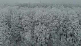 Luchthommellengte bevroren bomen in ijs in de de wintermist 4k stock video