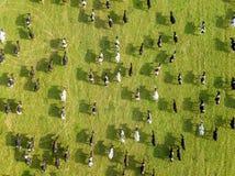 Luchthommelmening, een kudde van koeien die in weiden dichtbij ri weiden royalty-vrije stock afbeeldingen