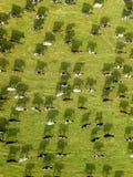 Luchthommelmening, een kudde van koeien die in weiden dichtbij ri weiden stock fotografie
