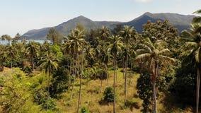 Luchthommelmening, eilandlandschap, kokospalmaanplantingen, Thailand Natuurlijke idyllische paradijsscène Bergheuvel stock footage
