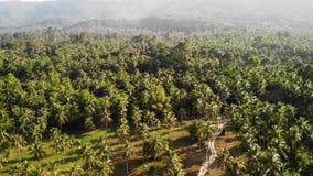 Luchthommelmening, eilandlandschap, kokospalmaanplantingen, Thailand Natuurlijke idyllische paradijssc?ne Bergheuvel stock footage