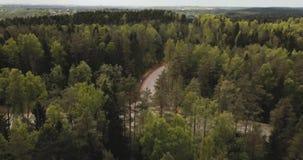Luchthommelmening van bos van de hemel, boven bomen en wegen Russisch landschap met pijnbomen en spar, zonnige dag in wildernis stock footage