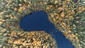 Luchthommelmening van bos met gele hierboven bomen en mooi meerlandschap van Het gebladerte van de daling royalty-vrije stock foto's