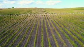 Luchthommelmening van wijngaardgebieden in het platteland vanaf de bovenkant europa stock video