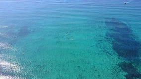 Luchthommelschot Mening van koralen van een mening van het vogel` s oog De surfers staan peddel het inschepen op De camera kijkt  stock video