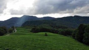 Luchthommelvlucht over Groene Regen Forest Jungles, Bergketen op de Achtergrond Het Toerisme van de reisvakantie nave stock videobeelden