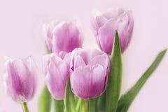 Luchtig boeket van gevoelige lilac tulpen voor gelukwensen royalty-vrije stock afbeelding