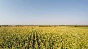 Luchtlandschap van graangewassen die zich langzaam aan het linker, zijaanzicht van het gebied bewegen Geregistreerd in 4k stock videobeelden