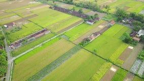 Luchtlandschap van padievelden en dorp stock footage