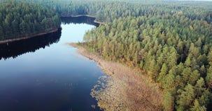 Luchtlengte die van Bos en Meer, langzaam over de Bovenkanten van de Bomen glijden - Humeurige Video, Noordoostelijk Europa stock videobeelden