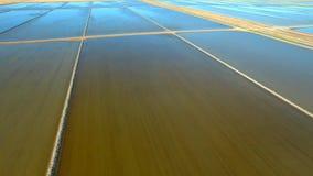 Luchtlengte die van Rijst NSW met Snelheidshelling kweken stock videobeelden