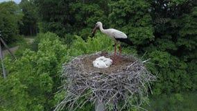 Luchtlengte van een ooievaar in zijn nest in wilde aard stock videobeelden