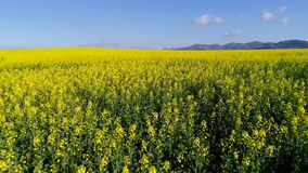 Luchtlengte van gegroeide gebieden in Zuid-Afrika stock videobeelden