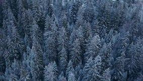 Luchtlengte van het bos van de de winterspar in de bergen Weergeven van hierboven van pijnboombomen met sneeuw worden behandeld d stock video