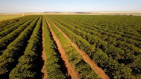 Luchtlengte van koffieaanplanting in Brazilië stock video