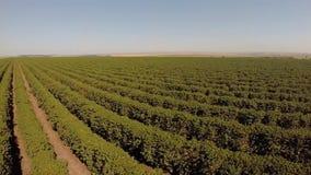 Luchtlengte van koffieaanplanting in Brazilië stock footage