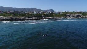 Luchtlengte van Zuidelijke Humback-walvis in Gansbaai, Zuiden Affrica stock videobeelden