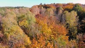 Luchtlengtemening Gekleurde de herfstbomen Vlucht over de herfstbergen met bossen, weiden en heuvels in zachte zonsondergang