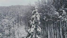 Luchtmening: De vliegende ower boom van de winterkerstmis stock video