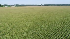 Luchtmening die over Graan en Sojaboongebieden en Landbouwbedrijven Smyrna Delaware vliegen stock footage