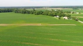 Luchtmening die over Graan en Sojaboongebieden en Landbouwbedrijven Smyrna Delaware vliegen stock video