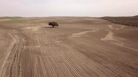 Luchtmening HD, die gebied, Duizendjarig Holm Oak dichtbij Mengibar planten stock video