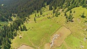 Luchtmening: het mooie landschap van de de herfstberg stock footage