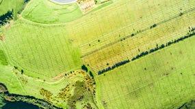 Luchtmening over een wijngaard op heuvels dichtbij Nieuw Plymouth Taranakigebied, Nieuw Zeeland stock afbeelding