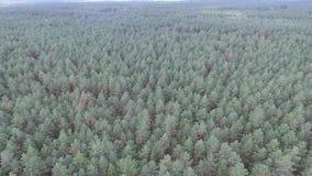 Luchtmening over het bos stock videobeelden