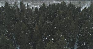 Luchtmening over het bos van de de winterspar Royalty-vrije Stock Afbeelding
